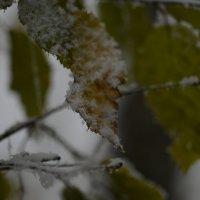 Первый снег на еще не опавшие листья :: Медведев Сергей