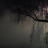 Ночь и туман :: Mike214