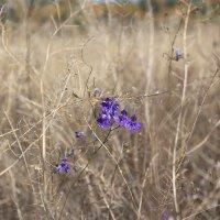 Полевые цветы :: Сергей Касимов