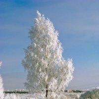 Зима :: Ольга Маркова
