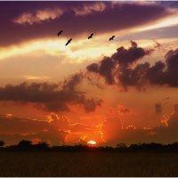 Запоздалые птицы :: Танкист .