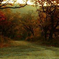 Дорога в осень :: Лилия Гиндулина