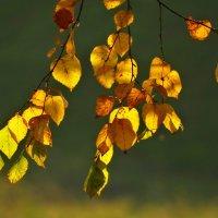 Краски осени :: Лилия Гиндулина