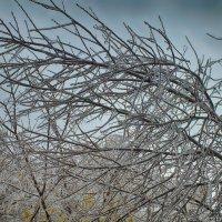 после ледяного дождя :: Михаил Николаев