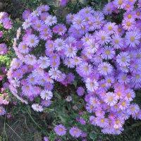 Сентябринки в октябре... :: Тамара (st.tamara)