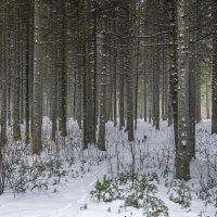 Зубаревский лес :: Юрий Митенёв