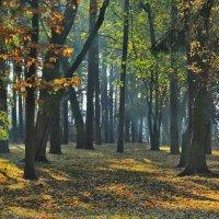 осень в парке :: Светлана З