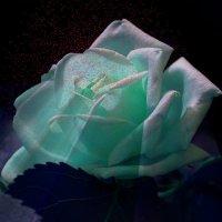 Луна и роза :: Владимир Хатмулин