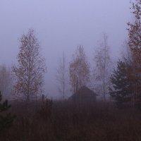 Осенние туманы легли на сердце грустью мне :: Татьяна Ломтева