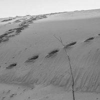 Серия «Один день в пустыне» :: Elena Agaeva