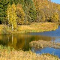 Лесные напевы :: Miola