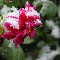 первый снег :: Наталья Ястребова