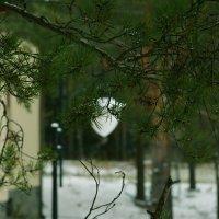 встречу зиме :: סּﮗRuslan HAIBIKE Sevastyanovסּﮗסּ