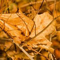 Осенний листок ноября. :: Виктор Евстратов