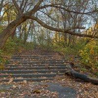 Забытый парк :: Denis Aksenov
