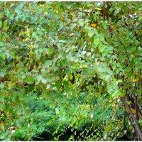 Осенний блюз... :: Тамара (st.tamara)