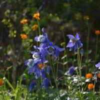 чудные цветы :: Елизавета Крутикова