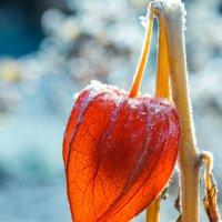 Мороз и солнце :: Константин Вергун