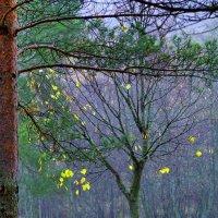 Последние листья :: Валерий Талашов