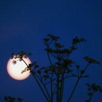 Луна :: Евгения Кирильченко