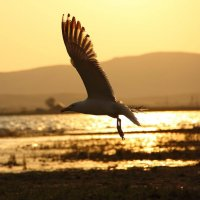 Чайка :: Виктор Дилянян