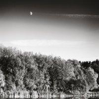 Луна над лесом :: Андрий Майковский
