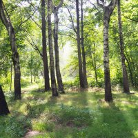 Утро в лесу :: Valeria Ashhab