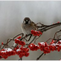 Начало зимы.................. :: Tanya S