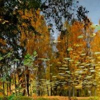 Осенние отражения (перевёрнуто) :: Юрий Цыплятников