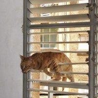 Да, пустите же меня домой! :: Николай