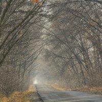 В туманной аллее :: Мария Богуславская