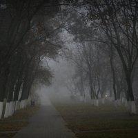 Утренний туман :: Вера Шамраева