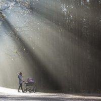 В лучах утреннего солнца :: Elena Zueva