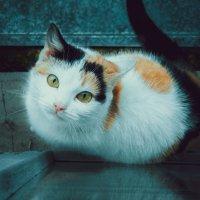 У кого есть кошка, тот может не бояться одиночества) :: Svetlanka S