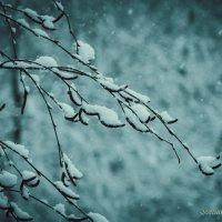Когда идёт снег, мы чувствуем себя детьми) :: Svetlanka S