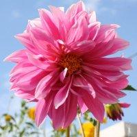 Красивый цветок :: Damir Si