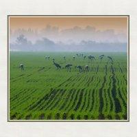 Гуляющие по полям. :: михаил