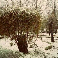 не сдаются листики перед зимой.. :: Наталья Бридигина