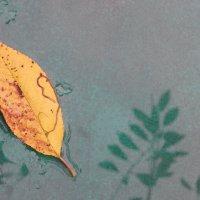 Осень :: Святец Вячеслав