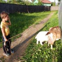 Так, а где еще пол козы :: Святец Вячеслав