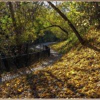 Осенний этюд :: Николай Дони