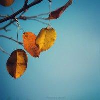 Осень :: Дмитрий Радченко