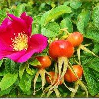 И цветы,и плоды ... :: Лидия (naum.lidiya)