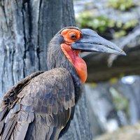 Клюв, глаза-у каждой птицы , а у меня еще ресницы ! :: Виталий Половинко
