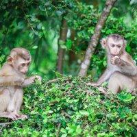обезьянки :: Евгений Л