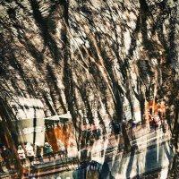 Когда деревья были большими :: Елена Волкова
