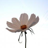 Летящий цветочек. Автор Саша. :: Фотогруппа Весна.