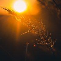 Там де є сонце :: Анна Каспер