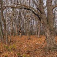 В осеннем лесу. :: Gene Brumer