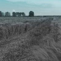 Урожай :: Владимир Мочалов